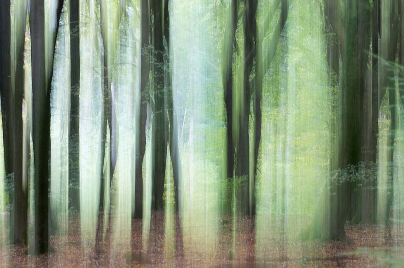 Bomen in beweging 1 van Danny Budts