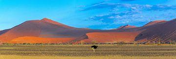 Struisvogel voor de rode duinen in de Sossusvlei, Namibië van Rietje Bulthuis
