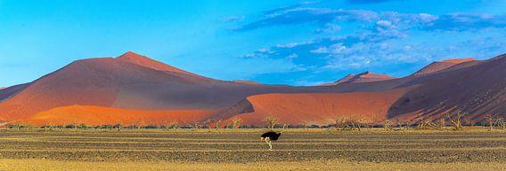 Struisvogel voor de rode duinen in de Sossusvlei, Namibië