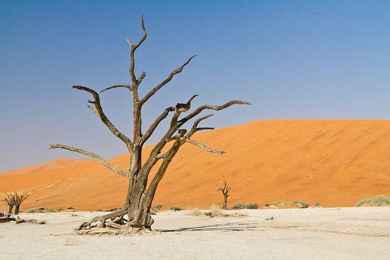 Deadvlei in Namibië