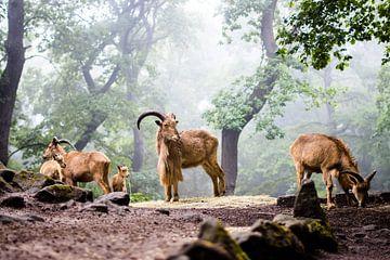 In de mist van Tierfotografie.Harz