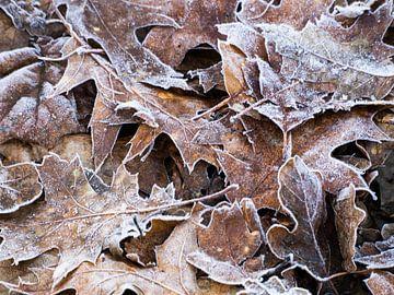 herfstbladeren met rijp van Dietjee FoTo