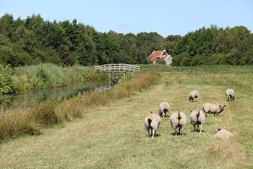 Schafe auf der Wiese von Ewan Mol
