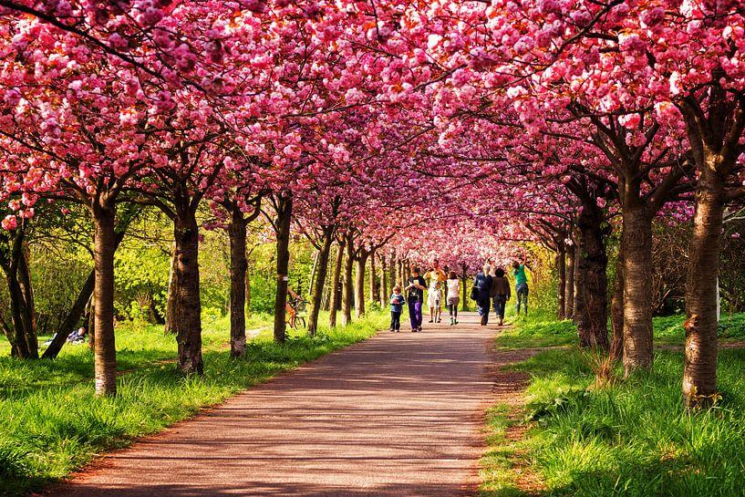 Berlin in Spring: Cherry Blossom Season van Alexander Voss