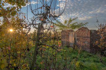 Vervallen schuur tussen de fruitbomen von Moetwil en van Dijk - Fotografie
