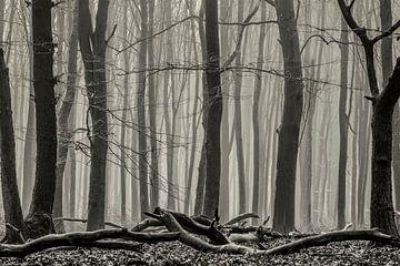 Boslandschap in Speulderbos van Jovas Fotografie