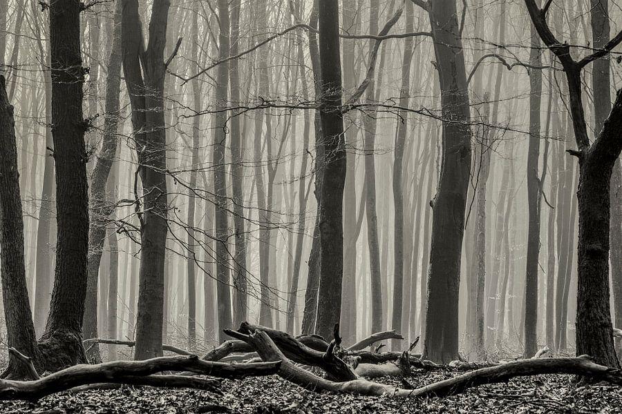 Boslandschap in Speulderbos