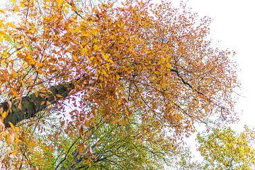 De herstkleuren van de bomen van Willy Sybesma