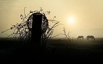 Horses..... van Wim Schuurmans