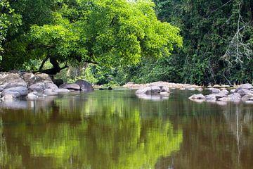 Spiegelbeelden in de Sipaliwinirivier in Suriname van rene marcel originals