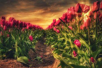 Die goldene Stunde von Tulipfield von Claudia De Vries