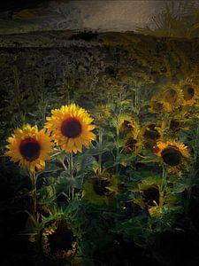 Zonnebloemen in het licht
