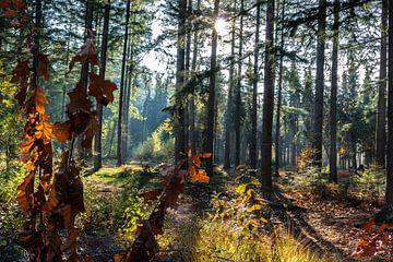 Waldblick von Femke Ketelaar