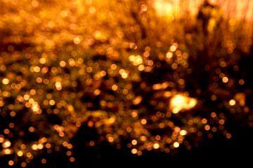Gold van Robert van der Veen