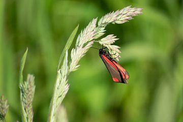 Frühling Schmetterling von Caro Hum