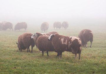 schapen in de mist van Tania Perneel