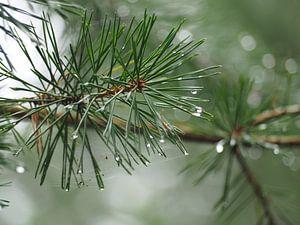 Regen im Wald von Marieke