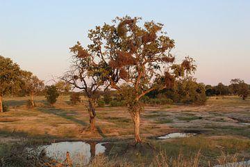 Landschaft Südafrika von Britney Suoss
