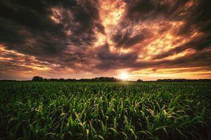 Maisfeld im Sonnenuntergang von Skyze Photography by André Stein