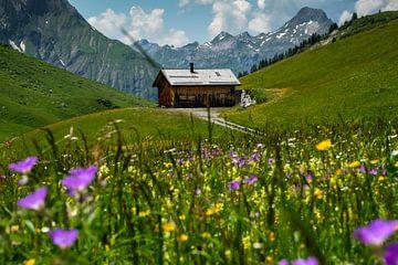 Almwiese in Österreich von Erich Fend