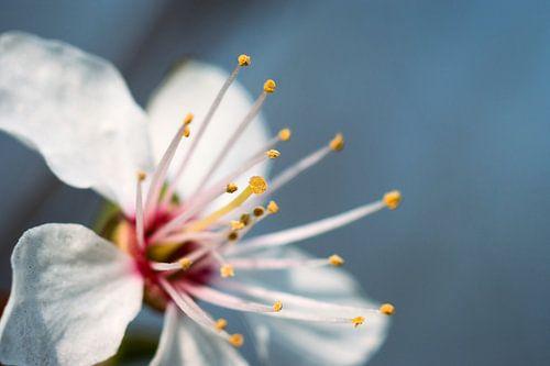 Witte bloem van André Scherpenberg