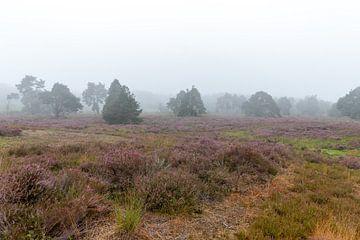 Landschaftsaufnahme von Johan Honders