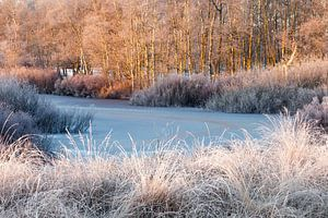 Bevroren ven met berk en witte grassen