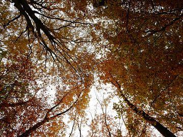 bomen in herfstkleuren van Joke te Grotenhuis