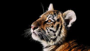 Sibirisches / Amur-Tigerjunges von Eye to Eye Xperience By Mris & Fred