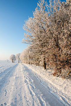 Schneepfad mit weißen Bäumen von Eric van Nieuwland