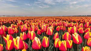 Dutch Flower Golden Hour