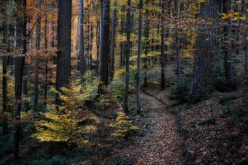 Bunter Schwarzwald von Joachim G. Pinkawa