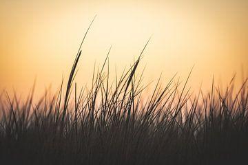 Duingras op het strand van Texel bij zonsondergang