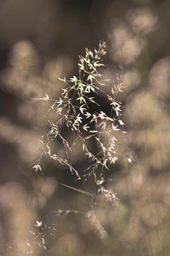 Pflanze von Thomas Heitz
