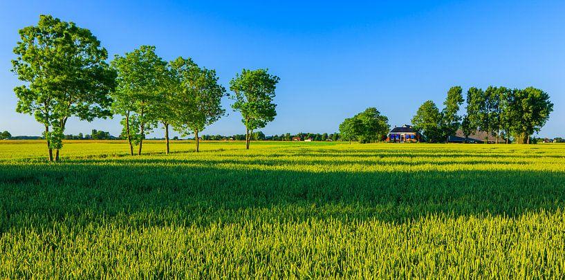 Thesinge, Provincie Groningen, Nederland van Henk Meijer Photography