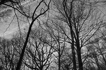 hohe Bäume im Wald von Freya Clauwaert