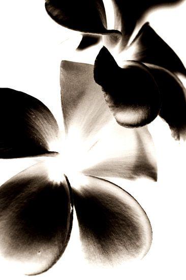Bloemen Contrast (ZW) van Ernst van Voorst