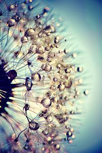 Pusteblume Blauer Kristall