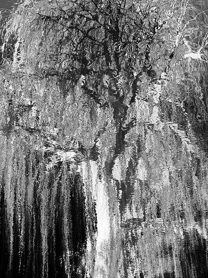 Tree Magic 83 van MoArt (Maurice Heuts)