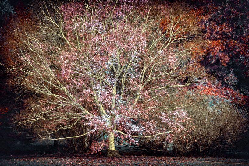 Toverboom van Lars van de Goor