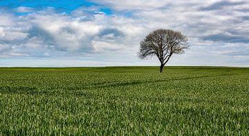 Landschaft mit Baum von jacky weckx