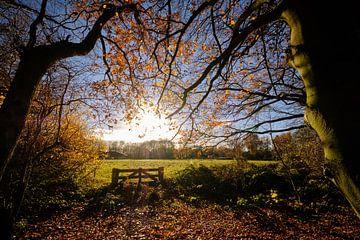 De herfst reikt naar de zon