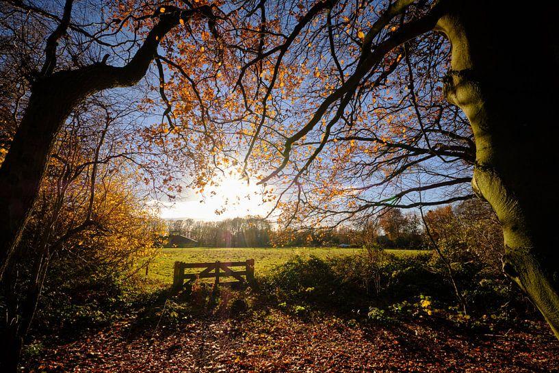 L'automne tend vers le soleil sur Sjoerd Mouissie