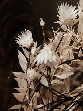 Florales Triptychon Nr. 1 von Alexander Tromp