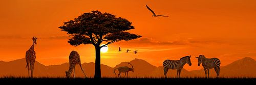Romantische Africa in Panorama