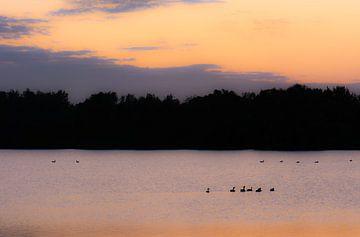 Lac dans l'heure bleue sur Tania Perneel