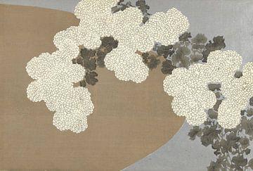Chrysanthemen von Kamisaka Sekka, 1909