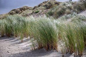 Duingras strand Ameland van Ilse de Deugd