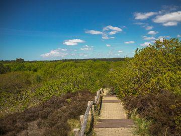 un escalier vers la nature