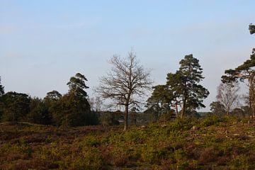 Heide met bomen van Gerard de Zwaan